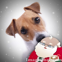 Jolly Santa Photo